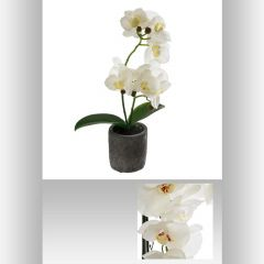 Orchidee real touch pot ciment 33 cm