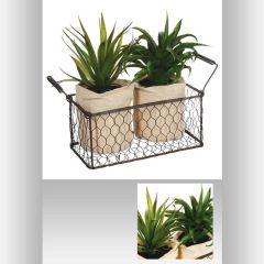 Aloe vera + panier 21 cm (2 pièces)