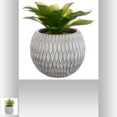 Plante grasse pot ciment 17 cm