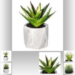 Plante grasse artificielle geom cim 7 cm