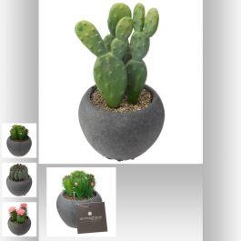 Cactus mix pot cim noir Ø 6,50 cm 11,70 cm